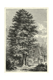 B&W Terry's Trees IV