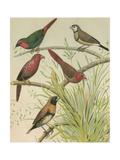 Birdwatcher's Delight III