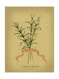 Herb Series III