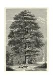 B&W Terry's Trees I