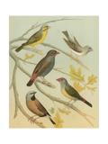 Birdwatcher's Delight IV