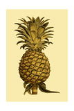 Sepia Pineapple I