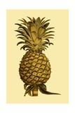 Sepia Pineapple I