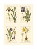 Miniature Botanicals III