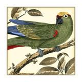 Tropical Parrot I