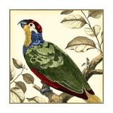 Tropical Parrot II