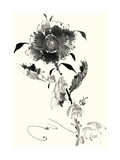 Studies in Ink - Rose I