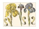 Custom Iris in Bloom I