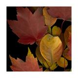 Small Vivid Leaves IV
