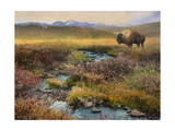 Bison and Creek