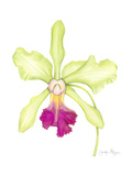 Small Orchid Beauty III