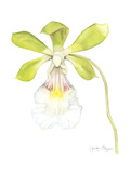 Small Orchid Beauty I