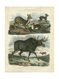 Deer and Moose