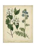 Cottage Florals I Reproduction d'art par Sydenham Teast Edwards