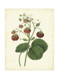 Plantation Strawberries I