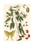 Small Catesby Butterfly and Botanical III Reproduction d'art par Mark Catesby