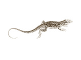 Sepia Lizard II