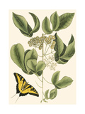 Small Catesby Butterfly and Botanical II