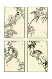 Woodblock Oriental Birds