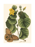 Small Catesby Butterfly and Botanical I