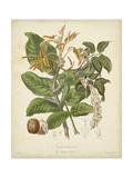 Twining Botanicals VI