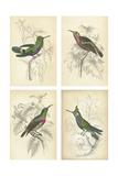 Jardine Hummingbirds