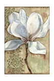 Magnolia Majesty I