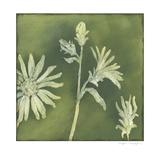 Verdigris Blossoms II
