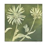 Verdigris Blossoms IV