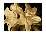 Yvoire Flower II