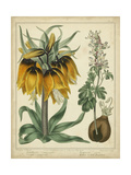Golden Crown Imperial