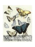 Butterfly Habitat II