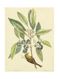 Catesby Bird and Botanical V Reproduction d'art par Mark Catesby