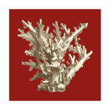 Small Coral on Red I