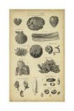 Study of Shells IV