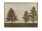 Silver Pine I