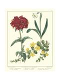 Gardener's Delight VIII