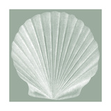 Seabreeze Shells II