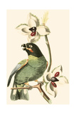 Cuvier Exotic Birds III