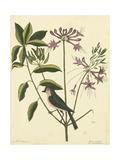 Catesby Bird and Botanical I