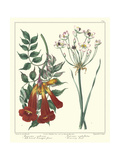 Gardener's Delight VI