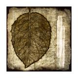 Fall Leaves III