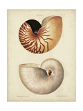 Antique Nautilus I Reproduction d'art par George Wolfgang Knorr