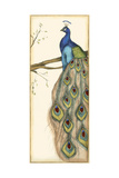 Small Rebecca's Peacock II