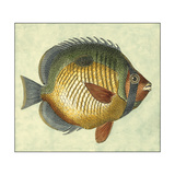 Small Butterfly Fish I