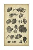 Study of Shells I