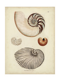 Antique Nautilus II Reproduction d'art par George Wolfgang Knorr