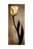 Damask Tulip I