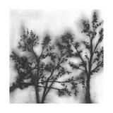 Silvery Trees II