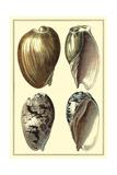 Classic Shells I